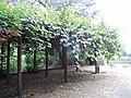 Focke-Garten Bremen 01.jpg