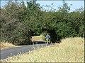 Folsom Bike Path at Hancock 056 - panoramio.jpg