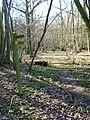 Footpath, Share Wood - geograph.org.uk - 344615.jpg
