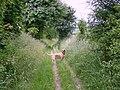 Footpath across Ansty Down - geograph.org.uk - 849394.jpg