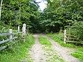 Footpath as it enters Hell Bank Wood - geograph.org.uk - 226905.jpg