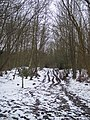 Footpath in Hemsted Forest - geograph.org.uk - 1709545.jpg