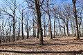 Forêt Départementale de Beauplan à Saint-Rémy-lès-Chevreuse le 14 mars 2018 - 12.jpg