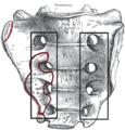 Foraminasacraliaanteriora.PNG