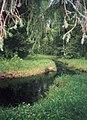 Forest (Vologda oblast).JPG