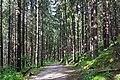 Forest - Chamonix, France - panoramio.jpg