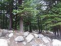 Forest Border.jpg
