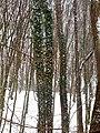 Forest Park Prešov 18 Slovakia6.jpg