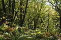 Forest at Tan-y-Bwlch (8208).jpg