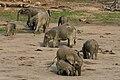 Forest elephant group 2 (6987537761).jpg