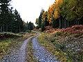 Forest track north of Loch Rannoch - geograph.org.uk - 1538713.jpg