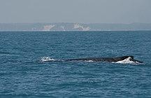Fraser Island-Birds-Frazer-island-whale-watch
