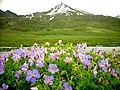 GB Deosai National Park -3.jpg
