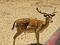 Gamo no Badoca Safari Park - panoramio.jpg