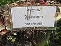 Gardenology.org-IMG 7398 qsbg11mar.jpg