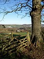Gate and tree, Hiller Lane - geograph.org.uk - 1633470.jpg