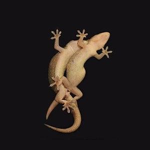 Geckos mating.jpg
