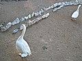 Geese (3354676283).jpg