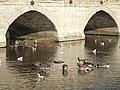 Geese and gulls neath Clopton Bridge - geograph.org.uk - 1520807.jpg