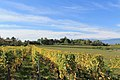 Geneva Countryside in Autumn - panoramio (96).jpg