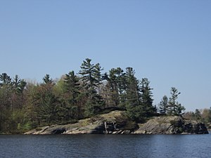 Georgian Bay Littoral - Image: Georgian Bay Littoral trees (2)