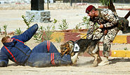 German dog handler during a demonstration by the German Army 04372
