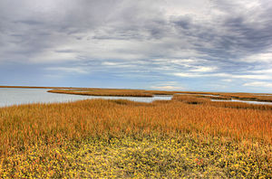 Galveston Island State Park - Wetlands in the park.