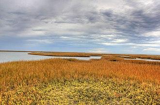Galveston Island State Park - Wetlands in the park.