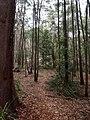 Gibberagong Trail - panoramio (10).jpg