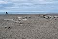 Gleneden Beach.jpg