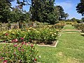 Golden Gate Park Rose Garden 7 2016-06-29.jpg
