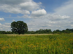 Governor Nelson State Park - Summer meadow view.