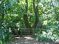 Gower Hey Wood - geograph.org.uk - 866977.jpg