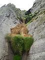 Grass (8045680825).jpg