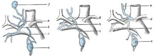 Jugular lymph trunk