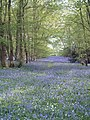 Gray Wood - geograph.org.uk - 113730.jpg