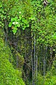 Green (8413895653).jpg