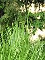 Green Nature 01.JPG