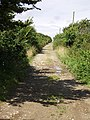Green lane from Callestock Veor to Pendown - geograph.org.uk - 31779.jpg