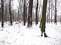 Großer Garten, Dresden in winter (1096).jpg