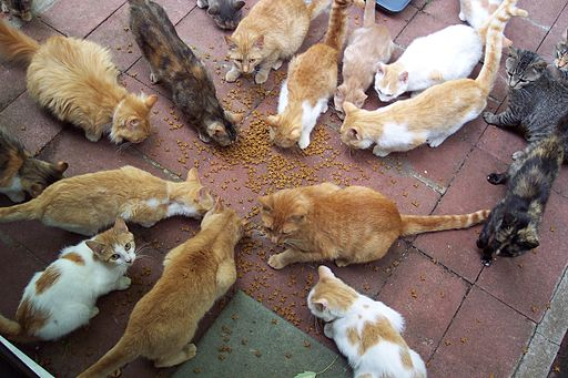 Group of cats circle around catfood cat lady