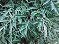 HK Central 愛丁堡廣場 Edinburgh Place 香港大會堂紀念花園 City Hall Memorial Garden green leaves July 2019 SSG 07.jpg