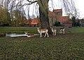 Haalderen Deer Park.jpg