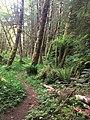 Haans Creek - Haida Gwaii (27232048086).jpg