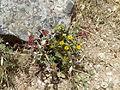 Hadassah Trail P1150504.JPG