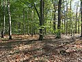 Hambach forest 33.jpg
