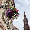 Hanging basket, Strasbourg, 2014 (01).JPG