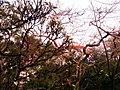 Hanging garden mumbai blooming flowers.jpg