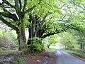 Harcombe Woods - geograph.org.uk - 166391.jpg