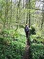 Harridge Wood, Nettlebridge. - panoramio.jpg